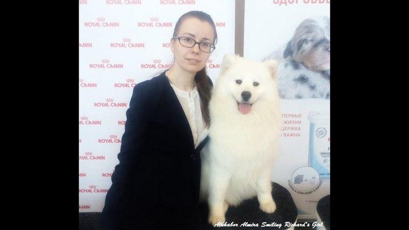 AA Smiling Richard's Girl-BOB, BOB JUNIOR - Nizhniy Novgorod, March 11 2018
