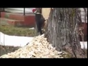 Woodpecker can't stop