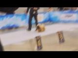 Дог-Шоу Чемпионов