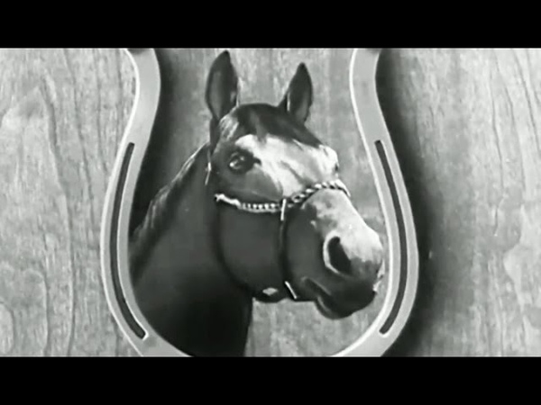 Seabiscuit (1939); Horse Racing Champion; 1938 American Horse of the Year