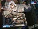 Муксун насколько восстановились запасы ценной рыбы после запрета на её вылов