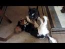 Funny pets-смешные питомцы