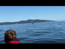 Orcas 03 09 2018