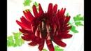 Украшение блюд ❃ Хризантема из луковицы ❃