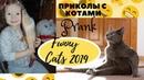 ПРАНКИ НАД КОТАМИ! приколы с котами до слез – Смешные коты – Funny Cats 2019