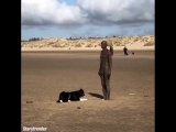Статуя не хочет играть с собакой