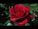 ERNESTO CORTAZAR - El Dia Que Me Quieras(romantic piano) [360p]