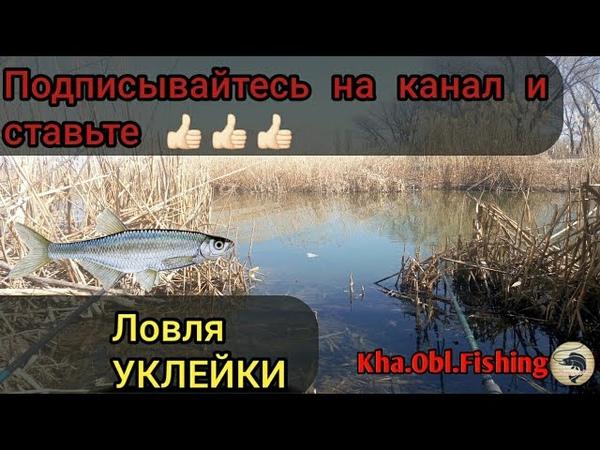 Рыбалка Весна Ловля УКЛЕЙКИ Себель