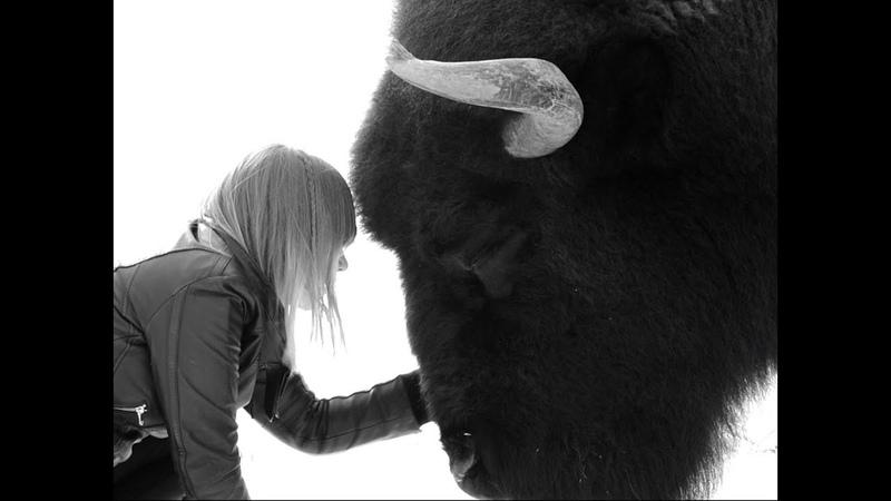 BLACK MIRRORS - Günther Kimmich