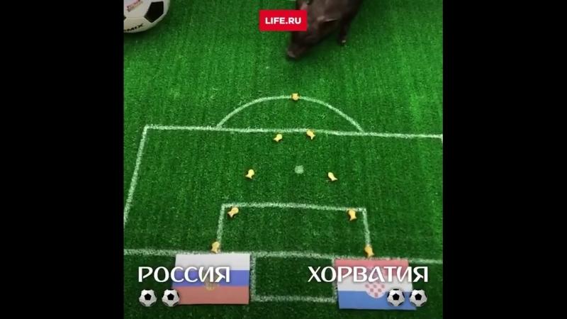Вот что напророчили уже знаменитые животные предсказатели перед матчем Россия 🇷🇺 Хорватия 🇭🇷 чм чм2018 orldcup2018