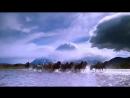 Amazing Galloping Horses