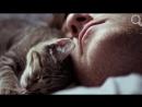 Сколько и как спят кошки - Интересные факты про кошек - Забавные, смешные, любоп.mp4