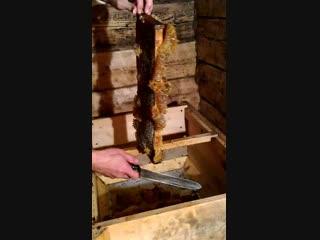 Вскрытие рамок с мёдом