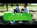IN TEA Судьба и предназначение заповедных мест Хороший чай и сломанная педаль велосипеда