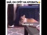 best_prikols_rus___BlhZoSpBP3x___.mp4