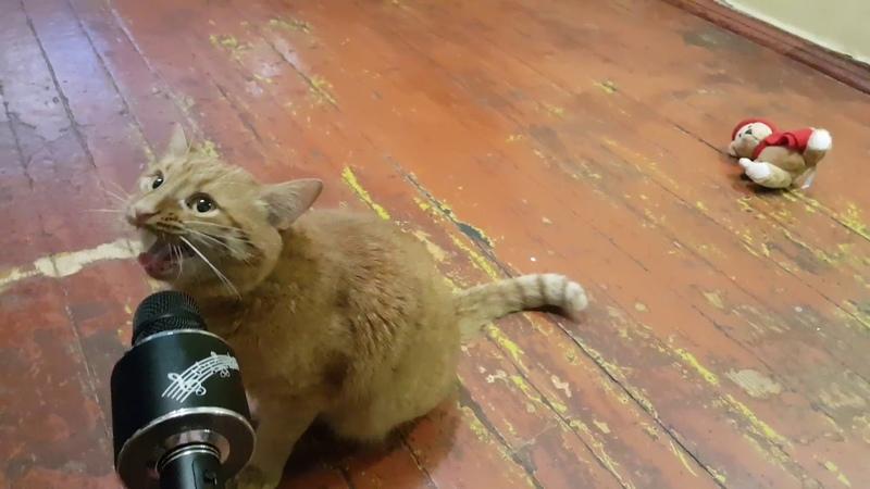 Кот поет в микрофон