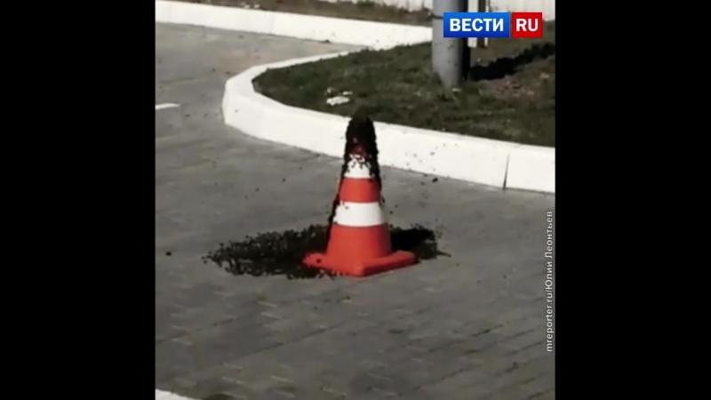 В Калининграде пчелы облюбовали дорожный конус