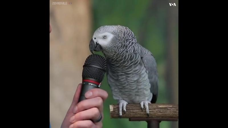 Einstein the Parrot - 9GAG