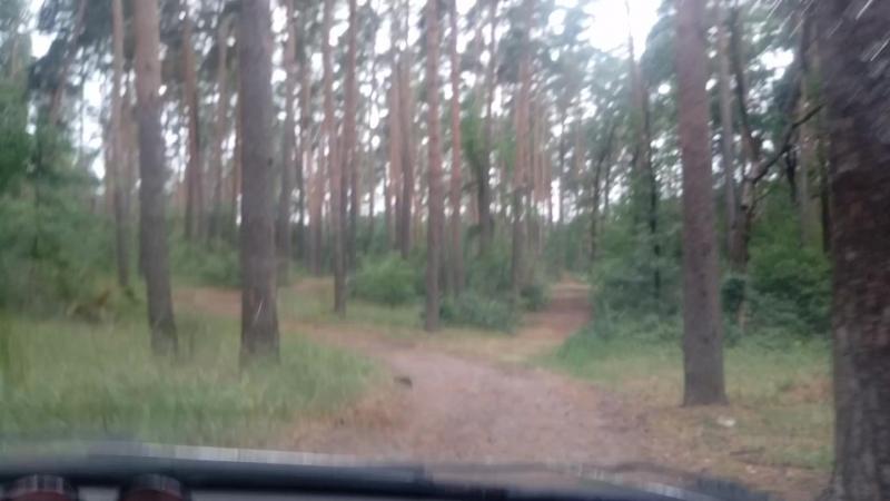 поездка по лесу