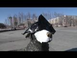 Телеграмная собака Дурова в Нижневартовске. ЭКСКЛЮЗИВ