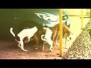 Quatro cachorros fazendo o impossível enquanto um galo observa