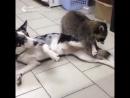 успокоитель в ветеринарке