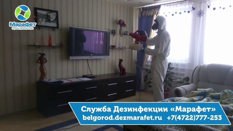 Как вывести мошек в Белгороде