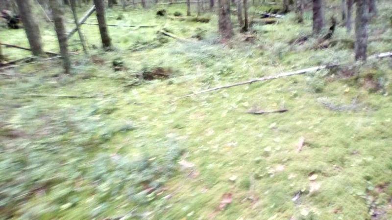 карельский перешеек. сказочный лес