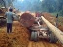 Teknik Muat Kayu Besar Ke Logging