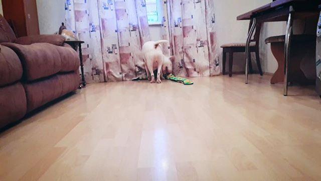 Monti_yu_and_tsar video