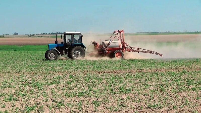 МТЗ 82 на химпрополке кукурузы