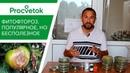 Фитофтора томатов и картофеля. 25 минут на знания или годы на бесполезные супер-средства
