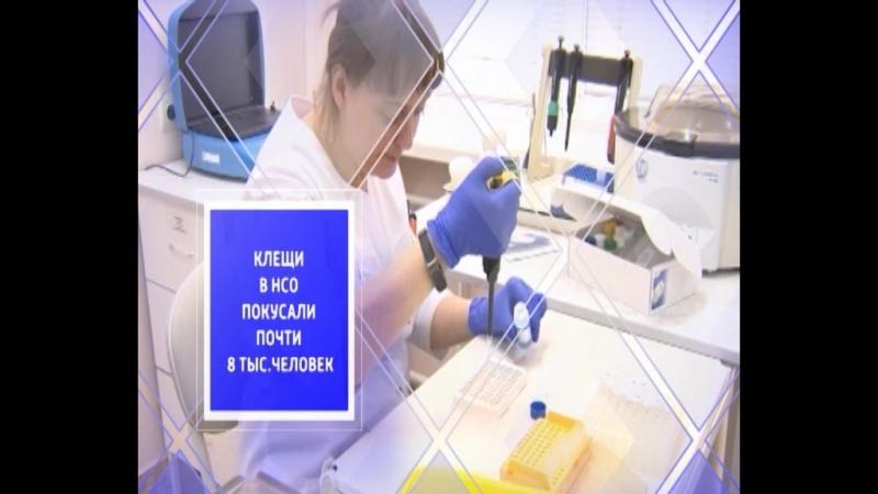 21 человек заболел клещевым энцефалитом в Новосибирской области