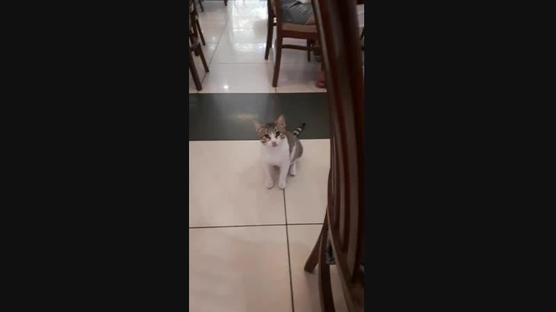 все коты как Дин)
