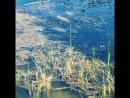 Ужик на озере