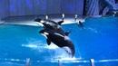 Москвариум на ВДНХ видеозапись шоу Тайна Четырёх Океанов дельфины, косатки, белуха и моржи (6.05.18)