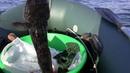 Керчь Энергомост На рыбалке Бычок жаба Разборки чаек