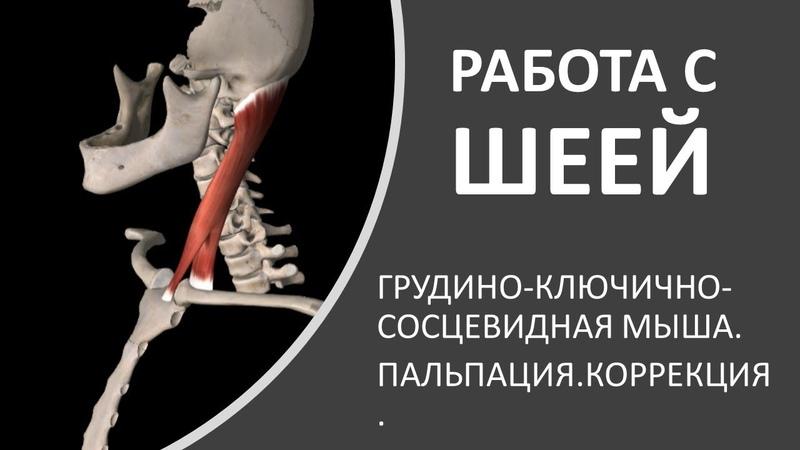 Работа с шеей грудино ключично сосцевидная мышца Александр Пилюгин