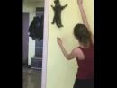 Что творит эта игрушка с котом ali.pub/31wubt