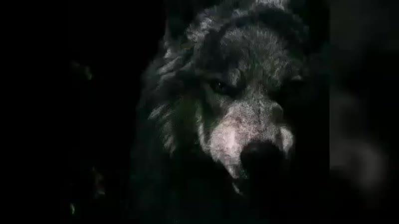 [v-s.mobi]Песня S.T.A.L.K.E.R. гимн одиночек.mp4