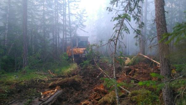 В Усть-Илимском районе ликвидирован лесной пожар на площади 13 тысяч га