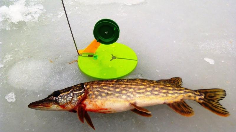 Рыбалка на ЩУКУ и ОКУНЯ ЖЕРЛИЦЫ и БЕЗМОТЫЛКА