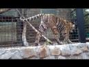 Тигры Разбойники понимаешшшшьььь
