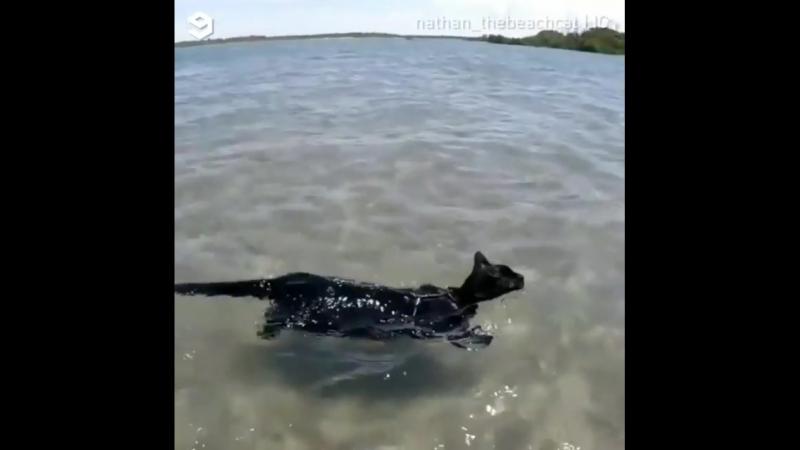 Beach Panther: king of catfish