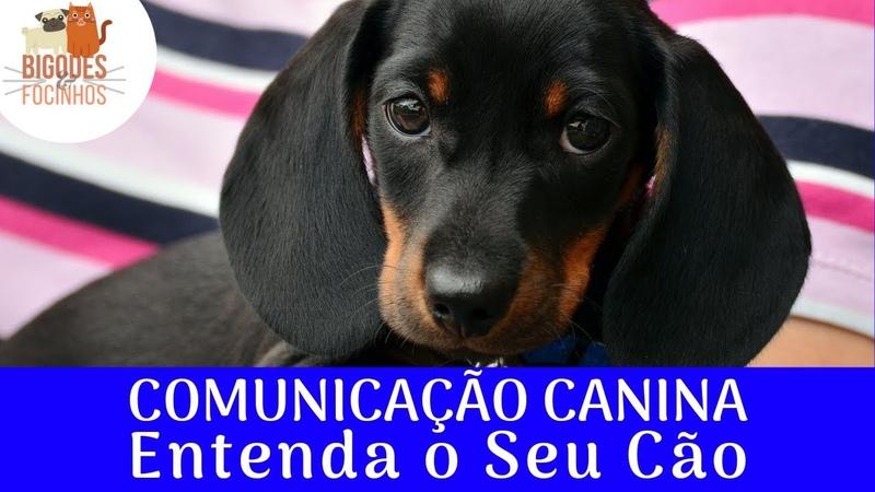Entenda Como Seu Cão Se Comunica