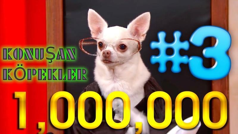 Konuşan Köpekler 3 - En Komik Köpek Videoları