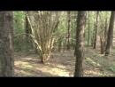 Сморгонь Лес 7 Холмы 2 и 3 Окопы и блиндажи