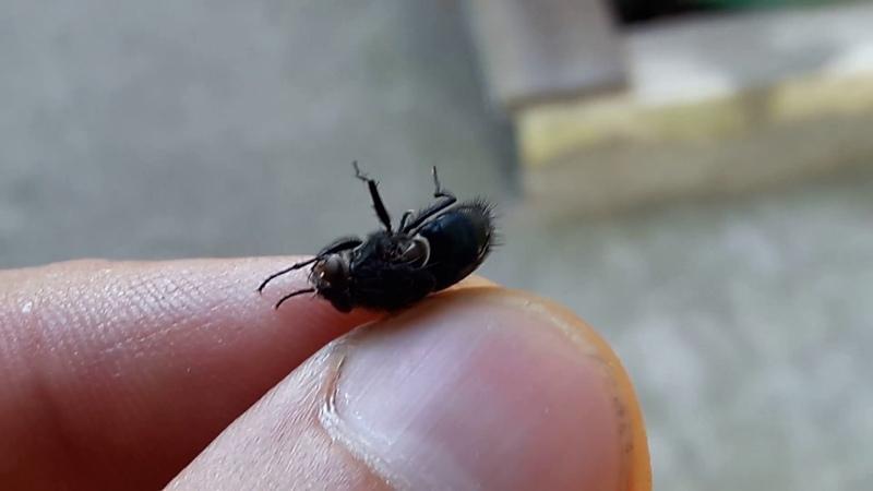 Как паук ест муху Праздник желудка у паука.