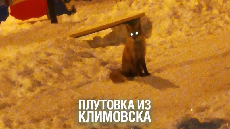 Лиса поселилась на детской площадке и охотится на кошек в Подольске - Подмосковье 2019 г.