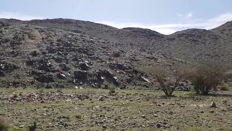 ١١- الاتجاه إلى ثنية ذي دبر حيث هرب فرسان عيينة بن حصن من الجيش النبوي